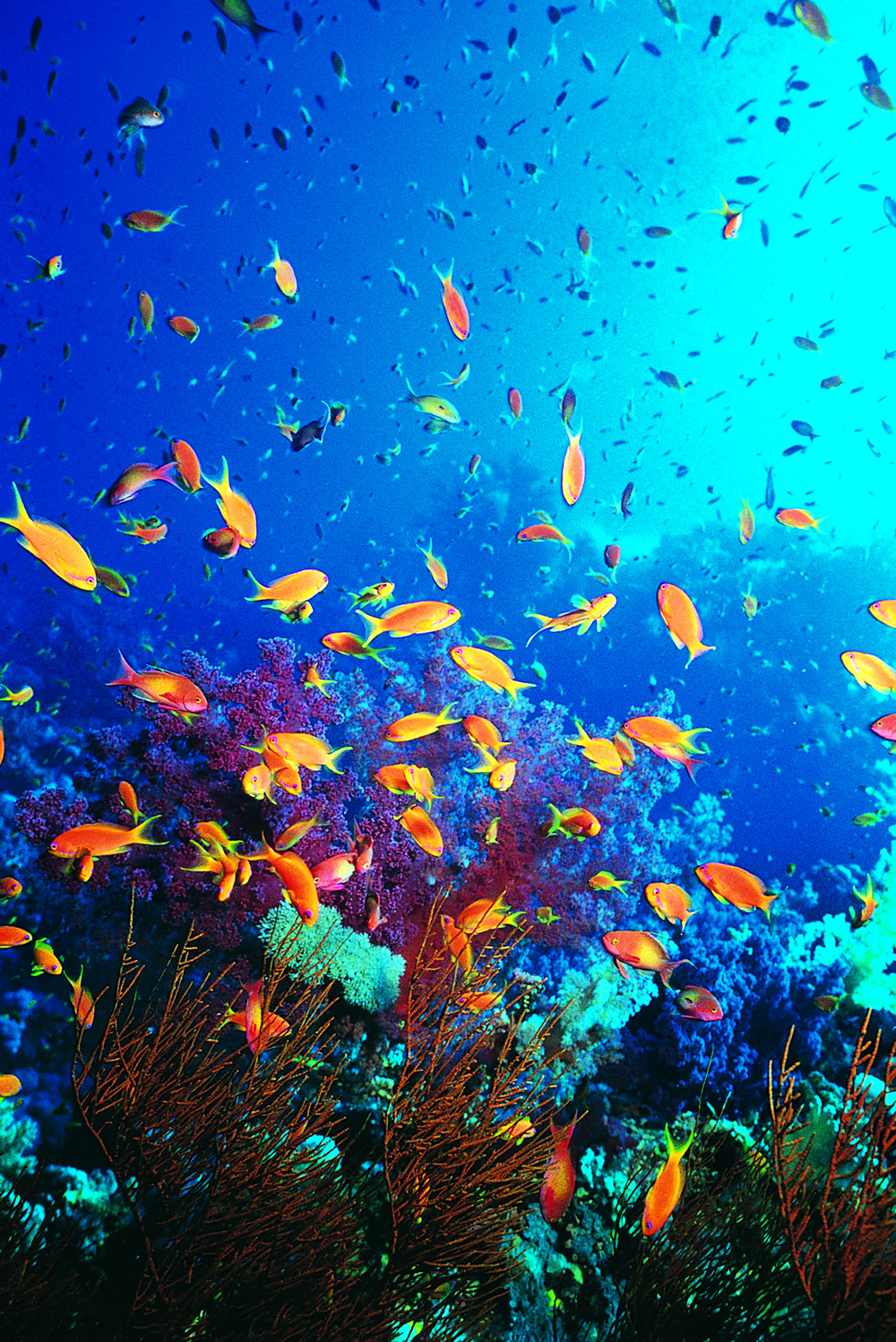 Vibrant ocean ecosystems marine fish conservation network for Fish in sea