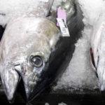 ICCAT Nations Betray Bigeye Tuna