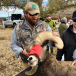 Deserts and Oceans: What Bighorn Sheep Can Teach Us About Marine Fisheries
