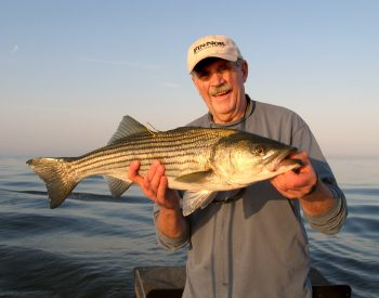 Capt. Al Anderson of South Kingstown, RI with striped bass.  He is the tagging king: over 60,000 gamefish in his career have been tagged.