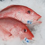 Federal Fisheries Laws Suffering Death of One Thousand Cuts