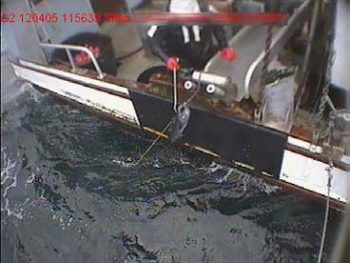 Typical view from an Electronic Monitoring Camera of an Alaskan Sablefish being brought on-board.  With modern EM systems, the frame rate & resolution are set to allow species ID by video reviewers.