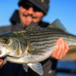 Virginia Marine Resources Commission's Emergency Action is Good News for Striped Bass