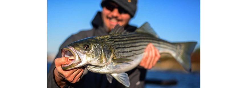 Fall Bass