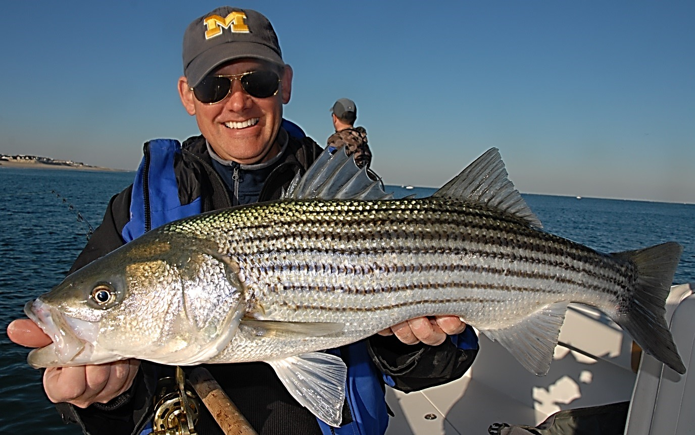 With Striped Bass, We'd Better Pay Attention - Marine Fish ...