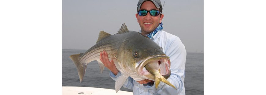 A graphic example of how bunker support fish like this bass. Photo by John McMurray.