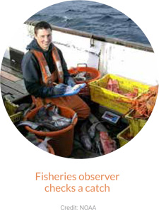 Fisheries observer checks a catch