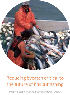 Reducing bycatch critical to the future of halibut fishing