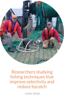 Researchers studying fishing techniques that improve selectivity & reduce bycatch