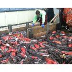 Utilizing Bycatch:  The Hidden Hazard