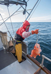 Catching rockfish