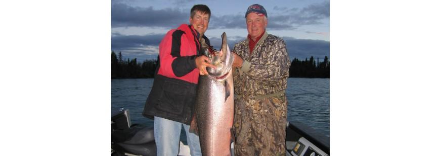 Kenai River Chinook Salmon