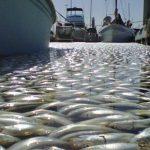 Recent Fish Kills Serve as a Wake-Up Call