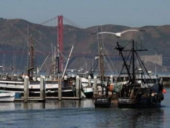 Fishing boats in California