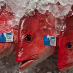 Where Does Traceability Fit into the Sustainable Seafood Conversation?