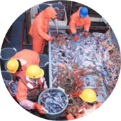 Strengthening Bycatch Provisions