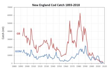New England cod catch