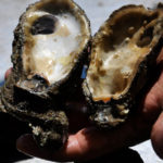 A Recipe Fail: 'Oysters Federal Inaction'