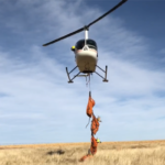 Pronghorn Restoration and the Future of US Fisheries