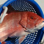 Gulf States Advance Red Snapper Exempted Fishing Permits