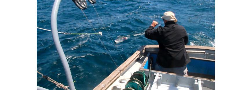 California salmon fisherman Mike Hudson wrestles a Sacramento River Chinook salmon on his boat, the F/V Cash Flo II