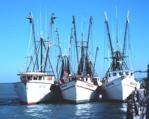 Shrimp Boats in the Florida Keys