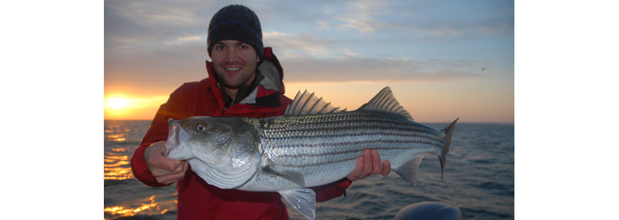 Striper at sunrise (striped bass)