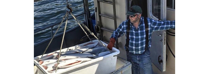 Alaskans Own fisherman Gregg Jones of the F/V Sea Miner unloads his catch of coho salmon. Photo credit: Alyssa Russell