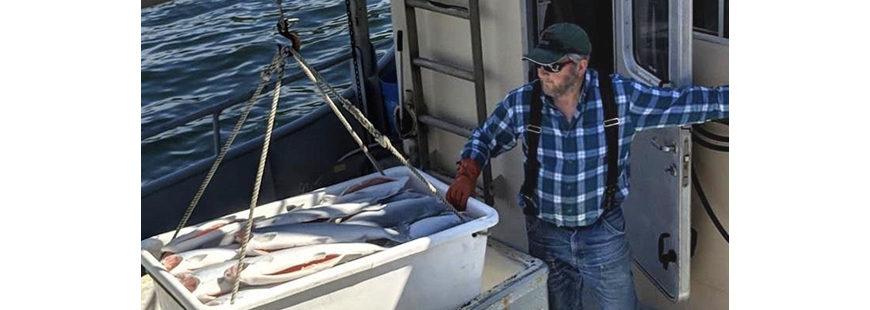Alaskans Own fisherman Gregg Jones of the F/V Sea Miner unloads his catch of coho salmon. Photo credit: Alyssa Russell